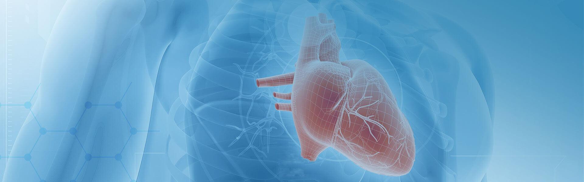 Cardiovascular